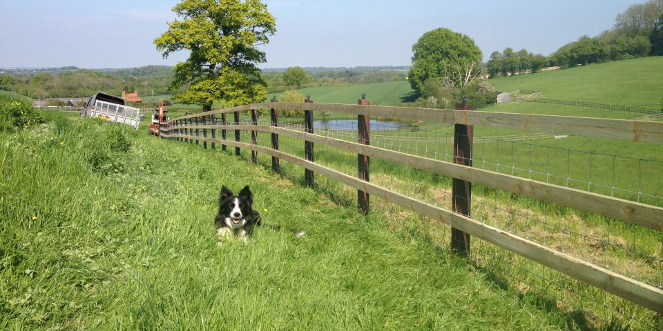 Equine / Horse Fencing