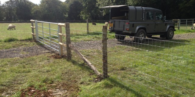 Sheep and horse fencing